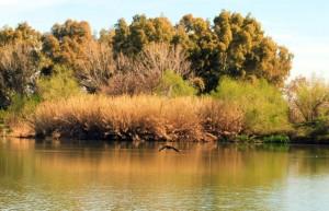 """Una giornata particolare per gli alunni dell'IC """"Laurenza"""" di Teano: alla scoperta della Riserva Naturale del lago di Falciano"""