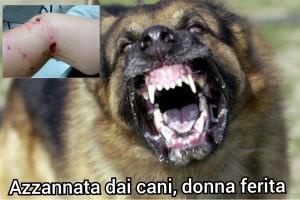Giovane sidicina azzannata dai cani mentre passeggia, 8 punti di sutura.