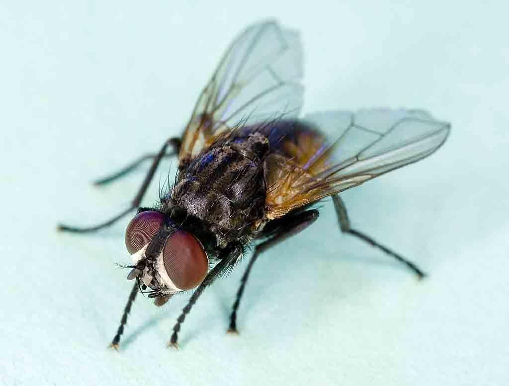 L'indispensabilità delle mosche.
